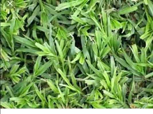 Natural Grass Instant Lawn And Landscaping Services