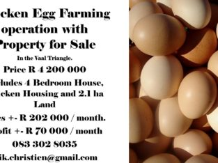 Chicken Egg Farming in Vaal Triangle.