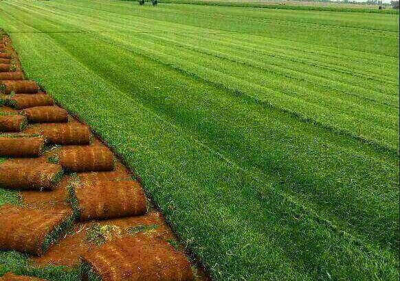 Greenfields Constructions and landscapes