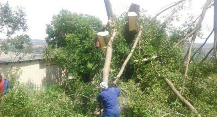 TREE FELLING AND INSTANT LAWN SERVICES