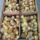 Where to buy Ross 308 A-Grade Broiler chickens