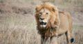 Uganda Safari | 7wonderssafaris.co.tz