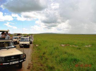 The Best African Safari Tour in Kenya