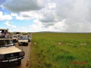 Best African Safari Tours in Kenya
