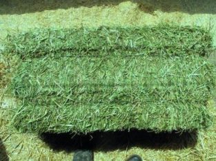 Animal Feed Grade Organic Alfalfa Hay Pellets /Alf