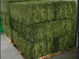 Quality Alfalfa Hay at very cheap price / Quality