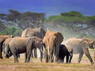 Offering the Best Africa Safari Travel in Kenya