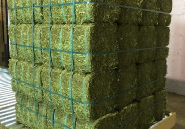 Grade A Lucerne Hay for sale whatsapp +27631521991