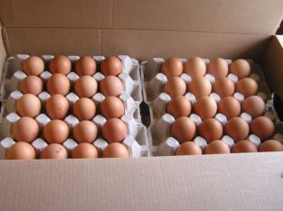 FRESH TABLE WHITE/BROWN EGGS WHATSAPP +27632431669