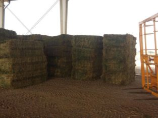 Alfalfa/Lucerne Hay North West