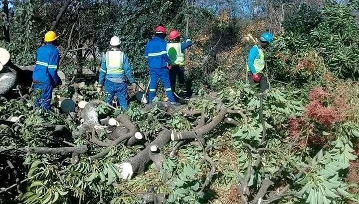 Unique Tree felling & Garden Service