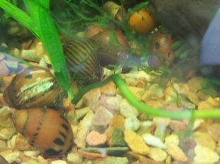 Tropical fish and accesories for sale