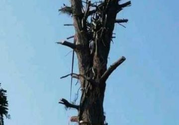 INTYM TREE FELLING AND GARDEN SERVICES