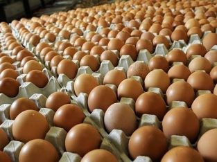 Chickens and Poultry products available at good prices