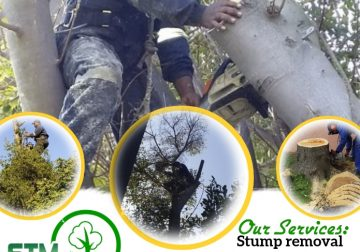 All tree felling services App or call for free quotation 06100771